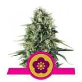 Power Flower