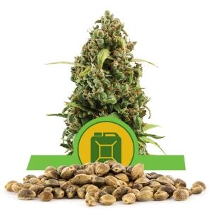 Diesel Automatic Bulk Seeds