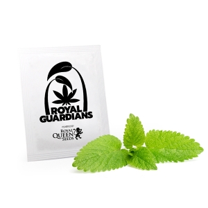 Lemon Balm Royal Guardians