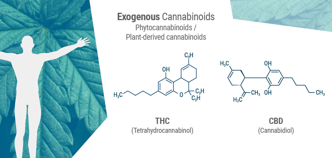 Exogenous Cannabinoids