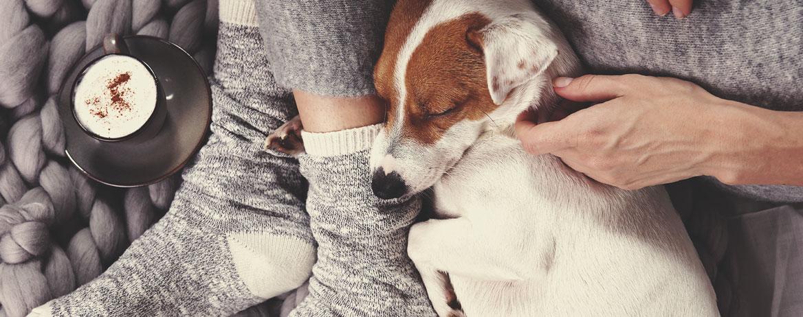 Ce trebuie să faci în cazul în care câinele tău consumă canabis?
